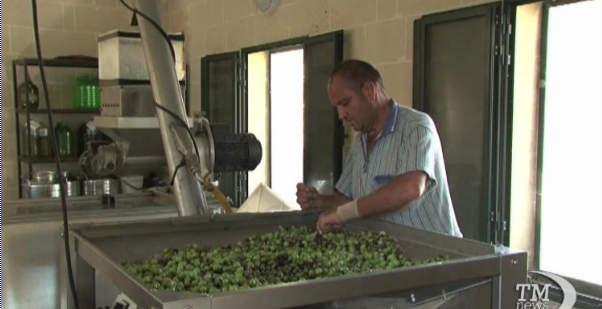 La festa delle olive bianche a Malta