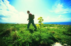 Greening The Islands, Malta