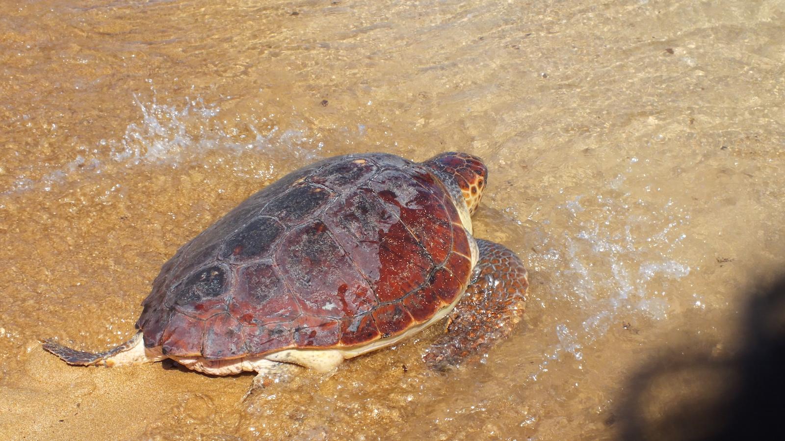 Scopriamo insieme la fauna marina di Malta